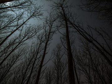 dark-woods-nightmare
